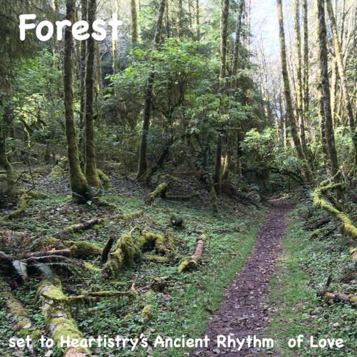 Forest Meditation