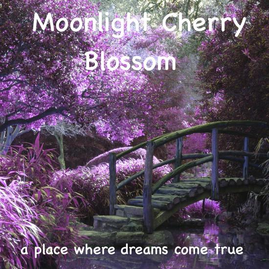 Moonlight Cherry Blossom Meditation