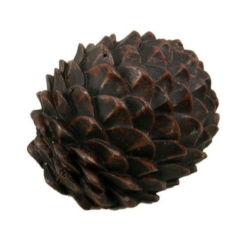 Pine Cone Key Hider