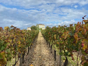 Pomerol vineyards in autumn