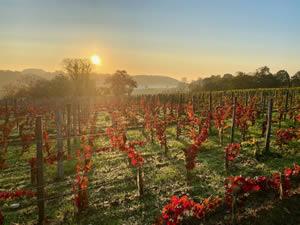 Saint-Émilion vineyards in autumn