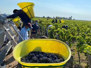 Harvest 2020 - Bordeaux red