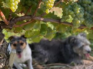2020- Year in the vineyard
