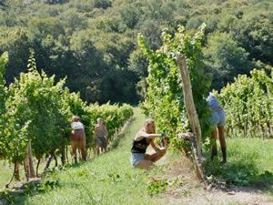 Harvest 2021 - Whites