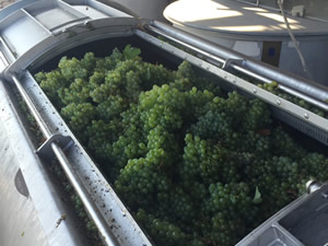 Semillon in the press