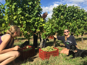 Harvest 2016 - Quinneys Picking