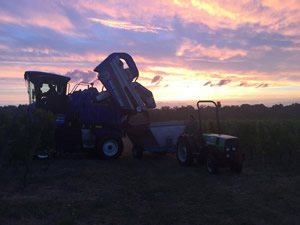 Harvest 2016 - Rosé at dawn