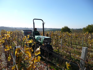 Vineyard work Autumn Fertliser