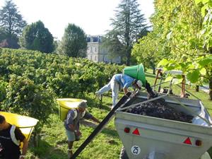 Bauduc Harvest