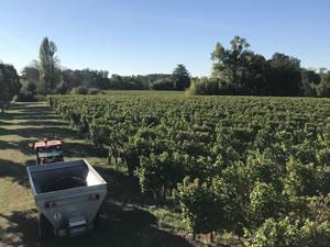 Harvest 2018 - Reds