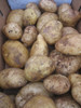 Kennebec Certified Non-Gmo Seed Potato - 2 Pounds - Garden Harvest Photo
