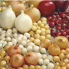 Spring & Fall Onion Bulb Sets (1lb. Mixed) - NON-GMO Seed Onions - Bushel Sack