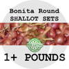 Round Shallot Sets For Sale - NON-GMO Bulbs For Seed - Stock Photo Bulk