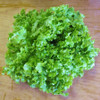 LETTUCE SEEDS - Green Salad Bowl, 1/8 oz. + Heirloom Organic Seeds, USA - Heirloom Large Lettuce Plants