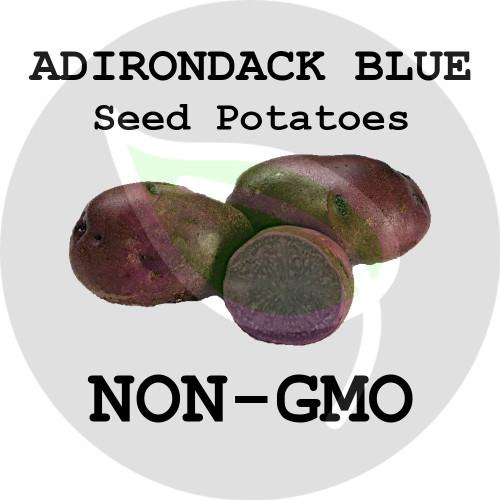 Adirondack Blue Certified Non-Gmo Seed Potato - Lbs., Pounds - Stock Photo