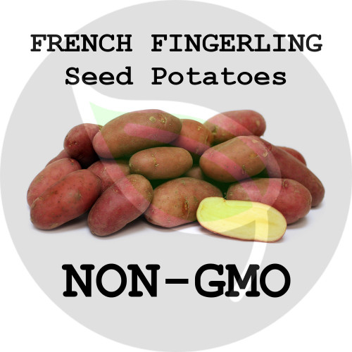 French Fingerling Certified Non-Gmo Seed Potato - Pounds, Lbs. - Stock Photo