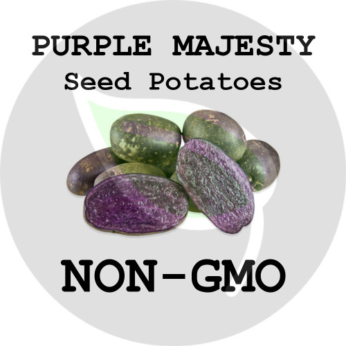 Purple Majesty Certified Non-Gmo Seed Potato - Lbs., Pounds - Stock Photo