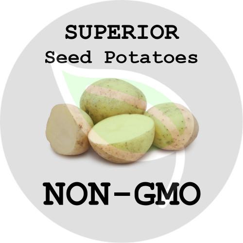 Superior Certified Non-Gmo Seed Potato - Pounds - Stock Photo