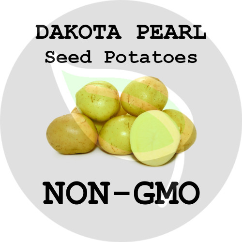 Dakota Pearl Certified Non-Gmo Seed Potato - Pounds - Stock Photo