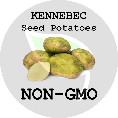 Kennebec Certified Non-Gmo Seed Potato - Lbs., Pounds - Stock Photo