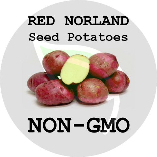 Red Norland Certified Non-Gmo Seed Potato - Lbs., Pounds - Stock Photo