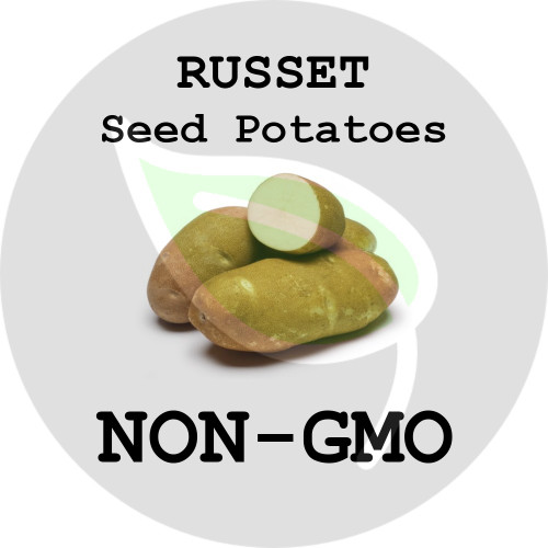 Russet Certified Non-Gmo Seed Potato - Lbs., Pounds - Stock Photo