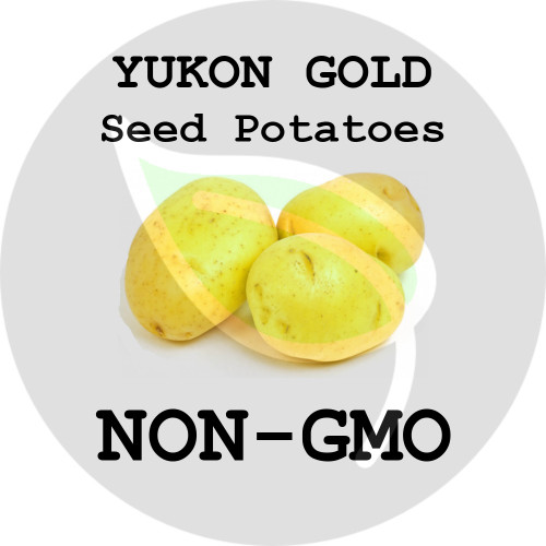 Yukon Gold Certified Non-Gmo Seed Potato - Lbs., Pounds - Stock Photo