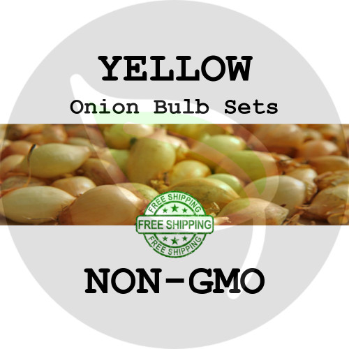 Spring & Fall Onion Bulb Sets (Yellow) - NON-GMO Seed Onions - Stock Photo