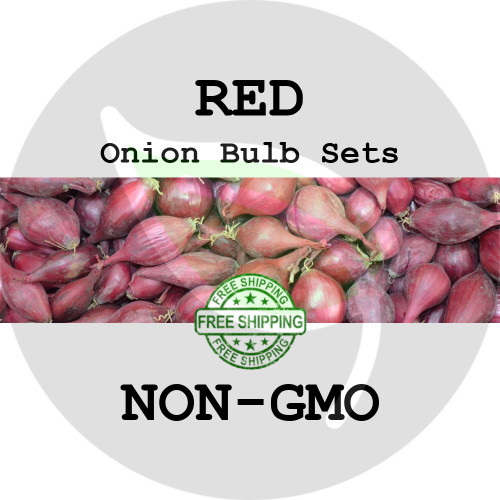 Spring & Fall Onion Bulb Sets (Red) - NON-GMO Seed Onions - Stock Photo