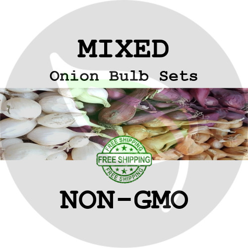 Spring & Fall Onion Bulb Sets (Mixed - Red, White, & Yellow) - NON-GMO Seed Onions - Stock Photo