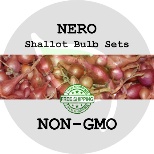 Nero Traditional Shallot Sets For Sale - NON-GMO Bulbs For Seed - Stock Photo Bulk