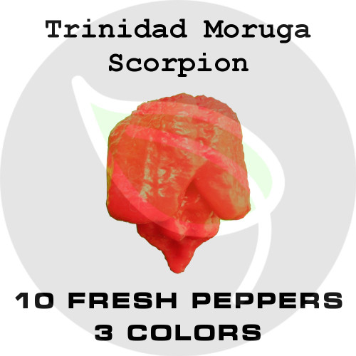 Trinidad Moruga Scorpion - 10 Fresh Pepper Pods with Seeds - Stock Photo