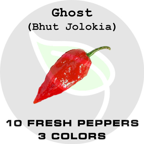 GHOST (Bhut Jolokia) - 10 Fresh Pepper Pods with Seeds - Stock Photo