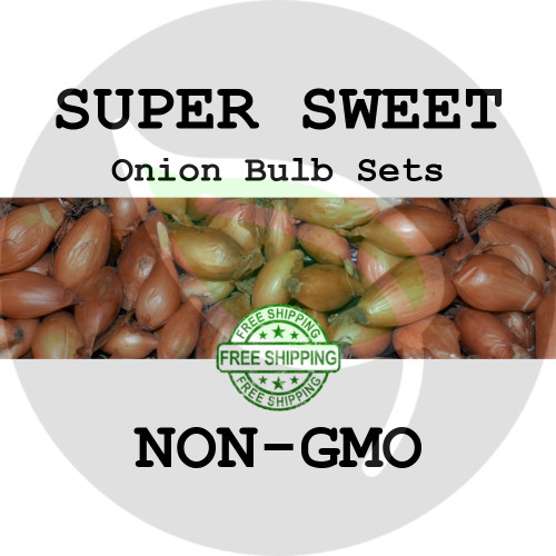 SUPER CANDY SWEET Onion Bulb Sets (Yellow) - NON-GMO Seed Onions - Stock Photo