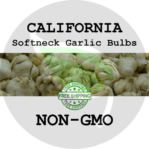 Softneck California White Garlic For Sale - NON-GMO Cloves, Bulbs For Seed - Stock Photo Bulk