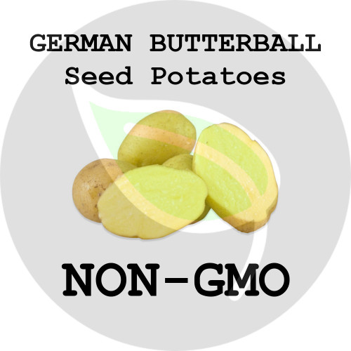 German Butterball Certified Non-Gmo Seed Potato - Pounds - Stock Photo