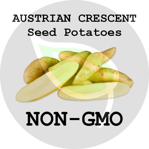 Austrian Crescent Fingerling Certified Non-Gmo Seed Potato - Pounds - Stock Photo