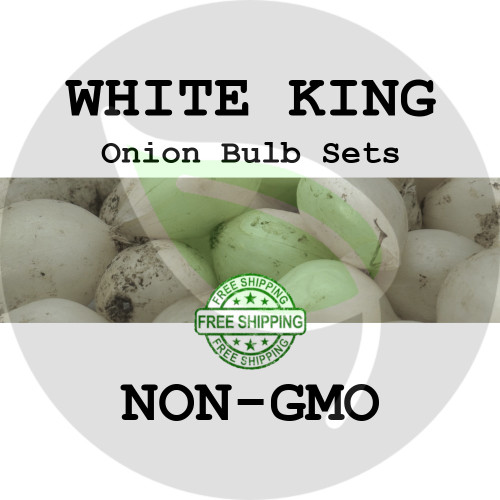Spring & Fall White King Onion Bulb Sets (White) - NON-GMO Seed Onions - Stock Photo