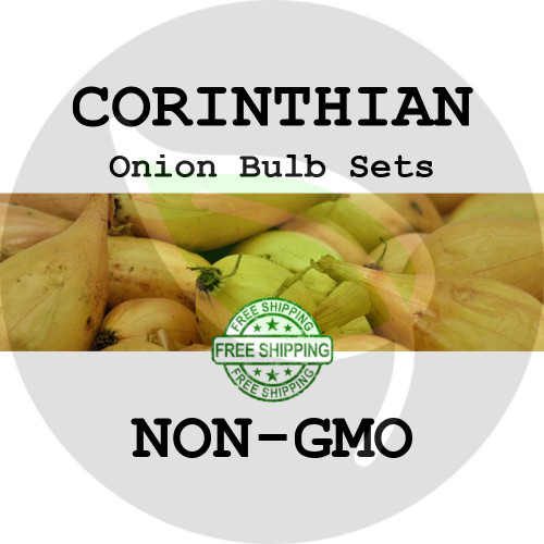 Spring & Fall Corinthian Onion Bulb Sets (Yellow) - NON-GMO Seed Onions - Stock Photo