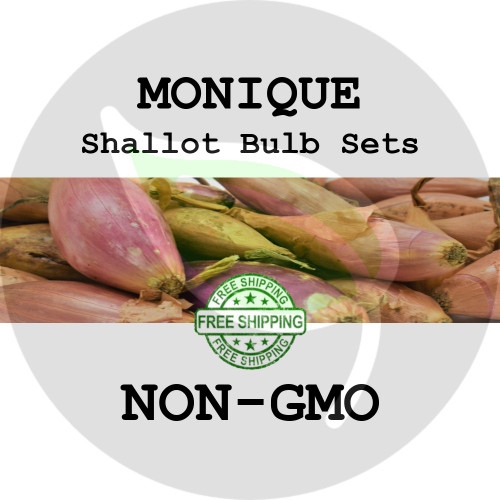 Monique Semi Long French Shallot Bulbs For Sale - Non-Gmo Sets, Greet Seed - Organically Grown Harvest