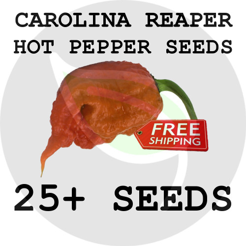 ULTRA HOT PEPPER SEEDS - Carolina Reaper, 25+ Seeds, USA - Organic Stock Photo