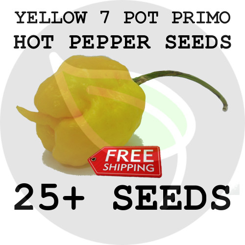 ULTRA HOT PEPPER SEEDS - Yellow 7 Pot Primo, 25+ Seeds, USA - Organic Stock Photo