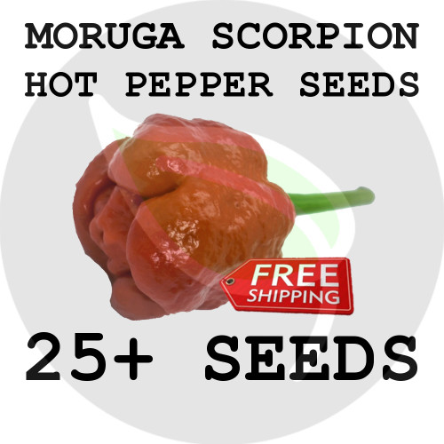 ULTRA HOT PEPPER SEEDS - Red Moruga Scorpion, 25+ Seeds, USA - Organic Stock Photo
