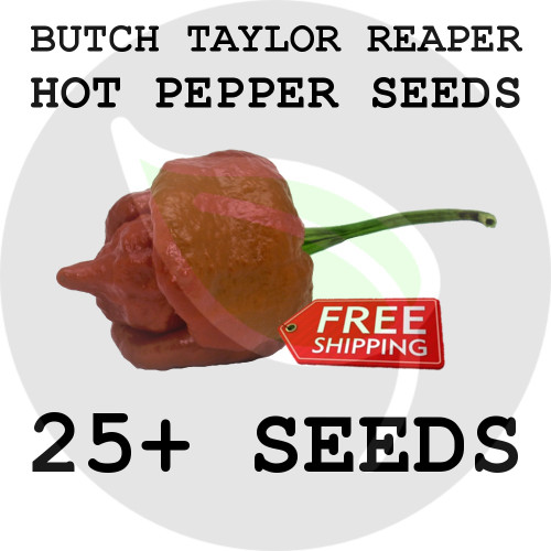 ULTRA HOT PEPPER SEEDS - Red Butch Taylor Reaper, 25+ Seeds, USA - Organic Stock Photo