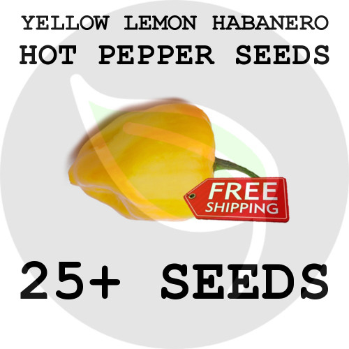 ULTRA HOT PEPPER SEEDS - Yellow Lemon Habanero, 25+ Seeds, USA - Organic Stock Photo