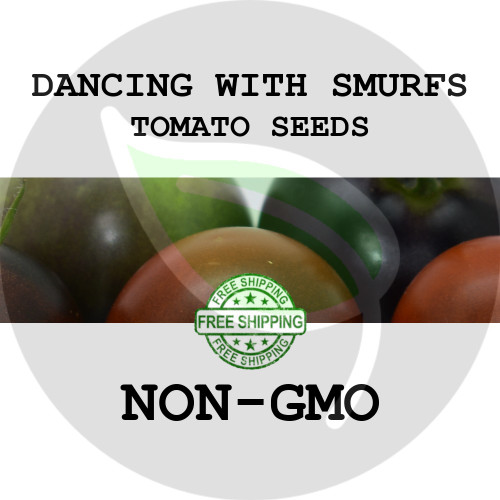 TOMATO SEEDS - Dancing with Smurfs, 30+ Heirloom Organic Seeds, USA - Organic Stock Photo