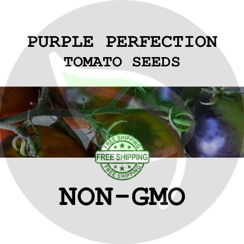 TOMATO SEEDS - Purple Perfection, 30+ Heirloom Organic Seeds, USA - Organic Stock Photo
