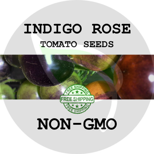 TOMATO SEEDS - Indigo Rose, 30+ Heirloom Organic Seeds, USA - Organic Stock Photo