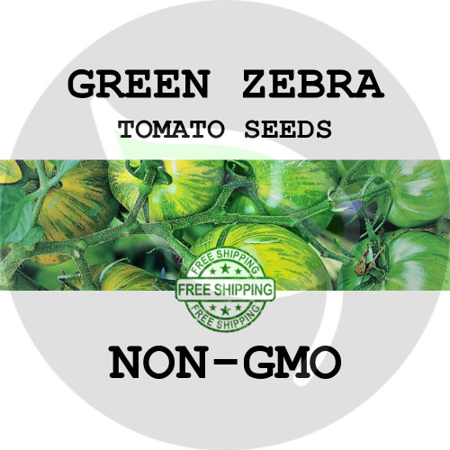 TOMATO SEEDS - Green Zebra, 30+ Heirloom Organic Seeds, USA - Stock Photo