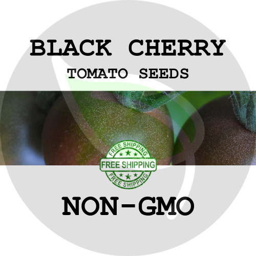 TOMATO SEEDS - Black Cherry, 30+ Heirloom Organic Seeds, USA - Organic Stock Photo